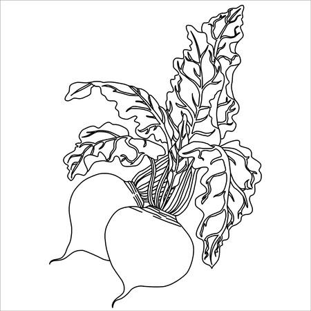 Noir. Betterave isolé sur blanc. Conception Flat style. Vector illustration. vecteur Cartoon Illustration.