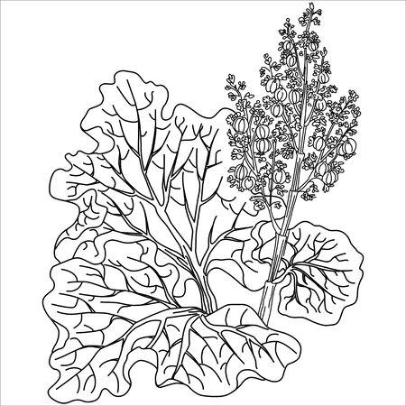 rhubarb: Vector isolated illustration. Rhubarb stalks harvested. Black.