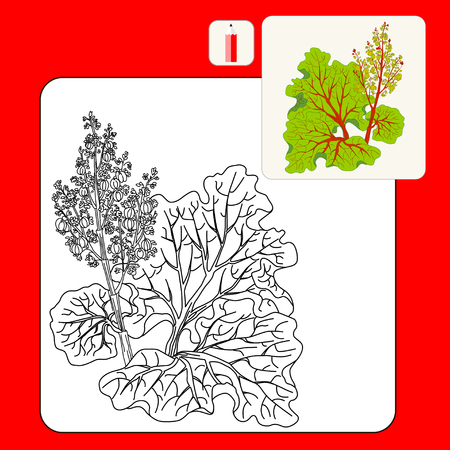 rhubarb: Coloring Book or Page. Picture rhubarb stalks harvested and vector isolated. Rhubarb isolated. Illustration