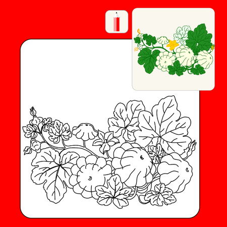 cymbling: Coloring Book or Page.Patty pan squash. Black. Pattypan squash growing on a white background. Illustration