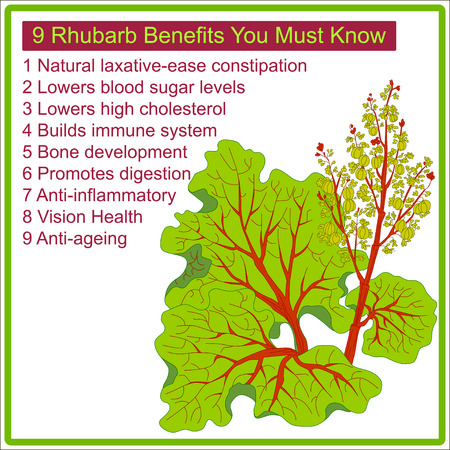 rhubarb: 9 Rhubarb benefits you must know. Infographic for rhubarb benefits .Vector illustration. Illustration