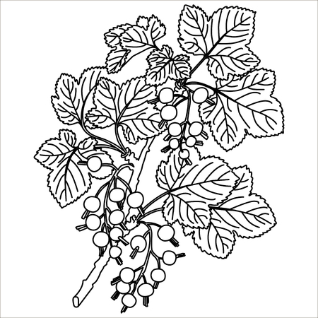 great: Hand drawn black currant stems in vector Illustration