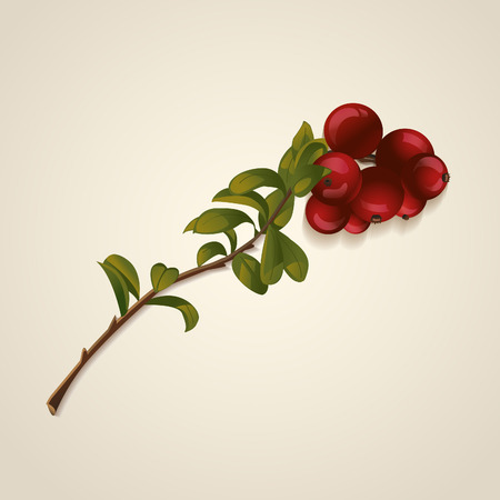 cranberries: Cranberries with green leaves. Vector illustration
