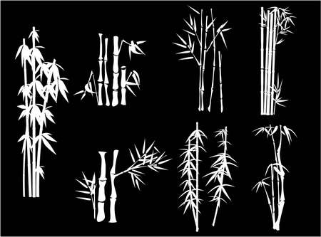 grasses: white bamboo on black background  Illustration