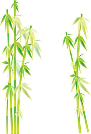 fengshui: bamboo Illustration