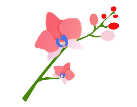 Pink orchid on a white background  Illustration