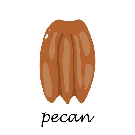 Pecan on white background in cartoon style. Flat vector illustration.