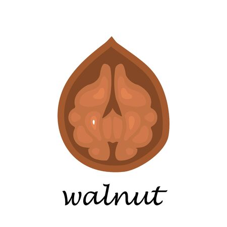 Walnut on white background in cartoon style. Flat vector illustration. 스톡 콘텐츠 - 132365432
