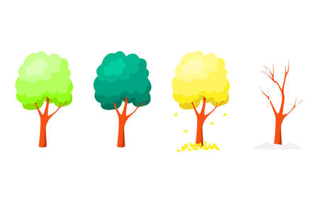 Set of trees at different times of the year on a white background.
