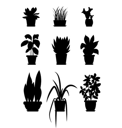 house plants: Set of house plant isolated. Vector flat house plant pot illustration. Collection of flat home plant pot. BLACK house plants in pot for your design. Home plants icons set