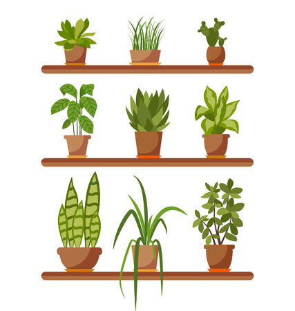 Set of house plant isolated. Vector flat house plant pot illustration. Collection of flat home plant pot. Colorful house plants in pot for your design. Home plants icons set 版權商用圖片 - 55699497