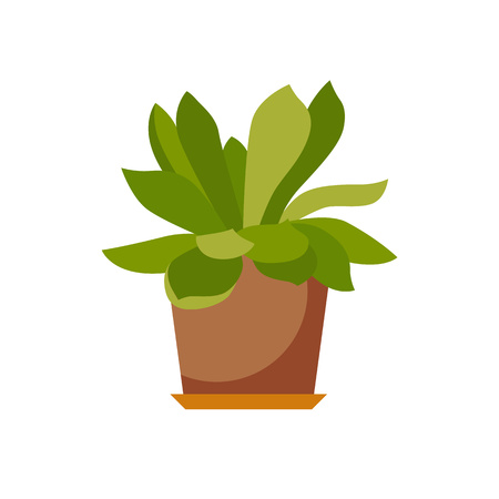 house plant: House plant isolated. Vector flat house plant pot illustration. Concept of flat home plant pot. Colorful house plant in pot for your design. Home plant icon