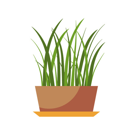 plant pot: House plant isolated. Vector flat house plant pot illustration. Concept of flat home plant pot. Colorful house plant in pot for your design. Home plant icon