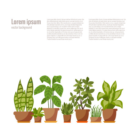 Set of indoor plant isolated flat indoor plant pot illustration. Collection of flat home plant pot.  イラスト・ベクター素材