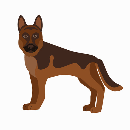 alsatian: Flat german shepherd pet illustration. Standing cute dog vector. Flat dog animal pet vector icon. Cartoon standing german shepherd in flat style. Dog colorful silhouette isolated on white background