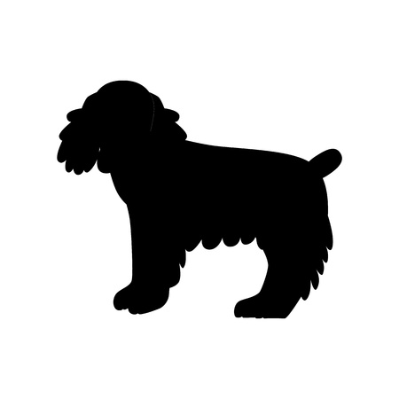 cocker spaniel: Flat cocker spaniel pet illustration. Standing cute dog vector. Flat dog animal pet vector icon. Home cartoon standing cocker spaniel in flat style. Dog colorful silhouette isolated on white background