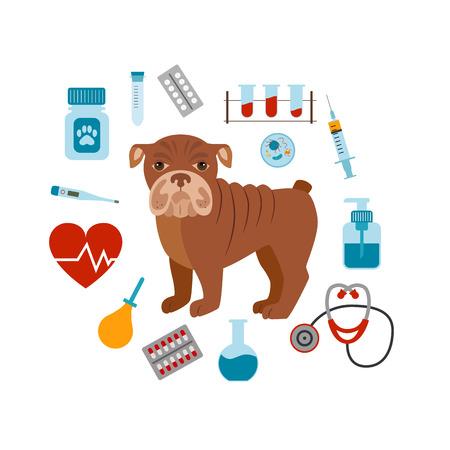 veterinary medicine: Vet cartoon concept. Vector veterinary dog illustration. Concept of flat veterinary clinic icons. Colorful veterinary medicine concept  for your design. Veterinary dog breed bulldog isolated.