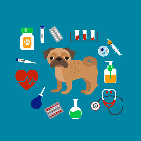 veterinary medicine: Vet cartoon concept. Vector veterinary dog illustration. Concept of flat veterinary clinic icons. Colorful veterinary medicine concept  for your design. Veterinary dog breed pug isolated. Illustration