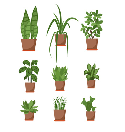 Set of house plant isolated. Vector flat house plant pot illustration. Collection of flat home plant pot. Colorful house plants in pot for your design. Home plants icons set