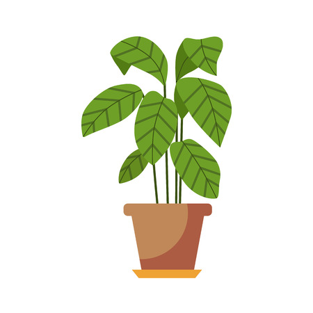 plant pot: Indoor plant isolated. Vector flat Indoor plant pot illustration. Concept of flat home plant pot. Colorful Indoor plant in pot for your design. Home plant icon