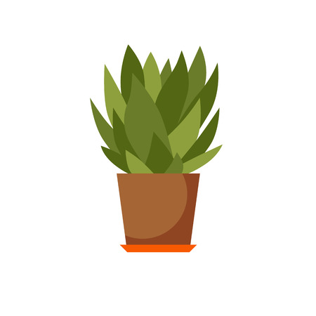 indoor: Indoor plant isolated. Vector flat Indoor plant pot illustration. Concept of flat home plant pot. Colorful Indoor plant in pot for your design. Home plant icon