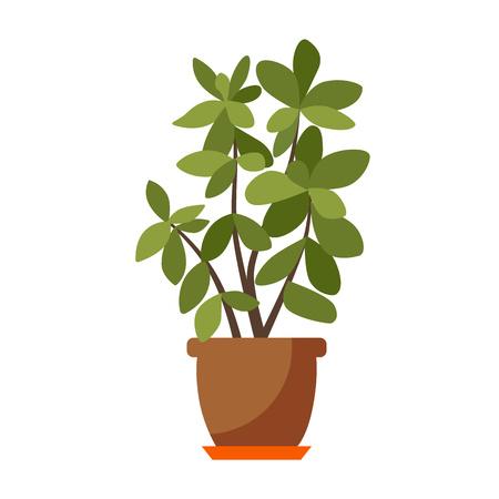 pianta della casa isolata. Vector casa piana pianta in vaso illustrazione. Concetto vaso casa piatta. pianta della casa colorata in pentola per il vostro disegno. icona Home impianto