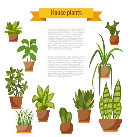 Set di pianta della casa isolata. Vector casa piana pianta in vaso illustrazione. Raccolta vaso casa piatta. piante da appartamento variopinte in pentola per il vostro disegno. Inizio piante set di icone Archivio Fotografico - 58293545