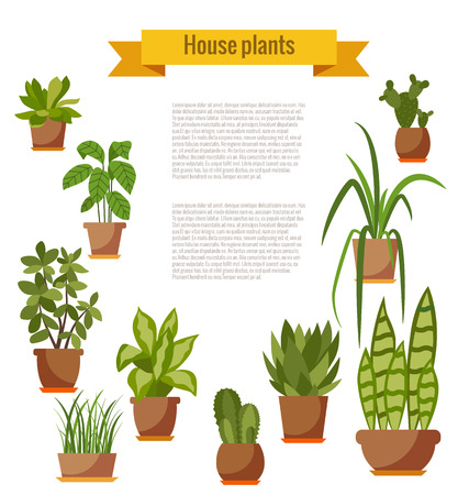 cactus flower: Set of house plant isolated. Vector flat house plant pot illustration. Collection of flat home plant pot. Colorful house plants in pot for your design. Home plants icons set