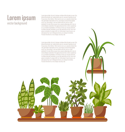 indoor: Set of INDOOR plant isolated. Vector flat indoor plant pot illustration. Collection of flat home plant pot. Colorful indoor plants in pot for your design. Home plants icons set