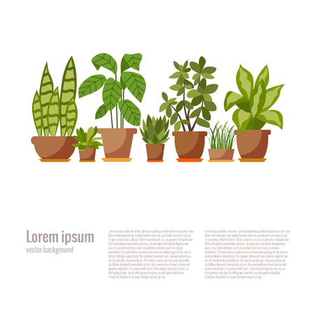 houseplant: Set of house plant isolated. Vector flat house plant pot illustration. Collection of flat home plant pot. Colorful house plants in pot for your design. Home plants icons set