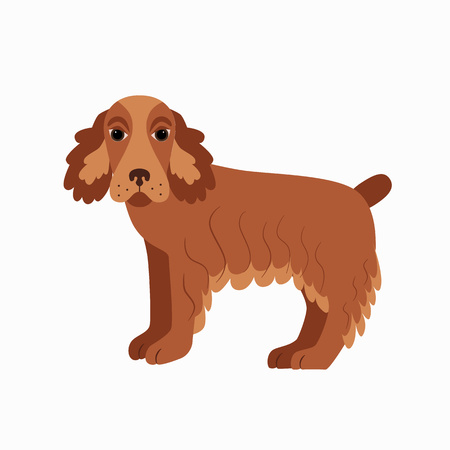 cocker spaniel: Flat cocker spaniel pet illustration. Standing cute dog vector. Flat dog animal pet vector icon. Home cartoon standing cocker spaniel in flat style. Dog colorful silhouette isolated on white