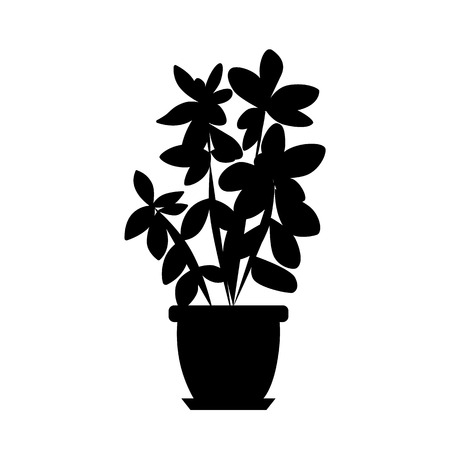 house plant: House plant isolated Illustration
