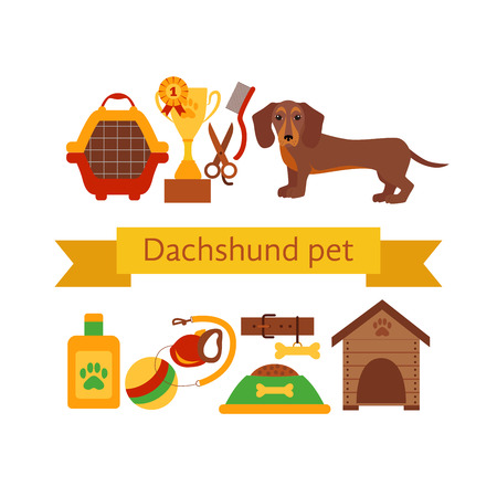 dachshund: Dachsund dog infografic concept with dog care isolated elements. Dachshund dog training  poster vector illustration. Colorful dachshund dog infografic icons concept. Puppy dachshund dog care concept