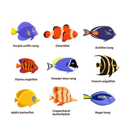 Cute fish vector illustration icons set. Tropical fish, sea fish, aquarium fish . Illustration