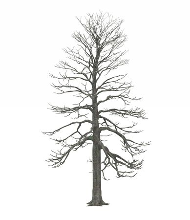 Leafless Winter tree Stock Photo