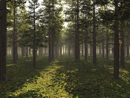 3d render of a light forest lit by the sun Stock Photo