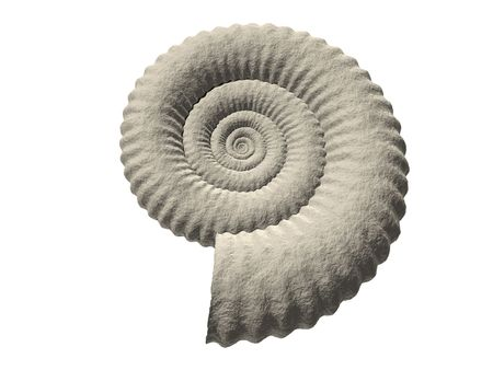render of a fractal ammonite