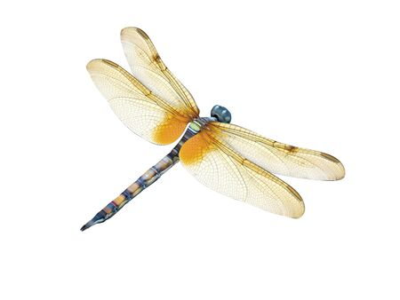 3d render of a dragonfly