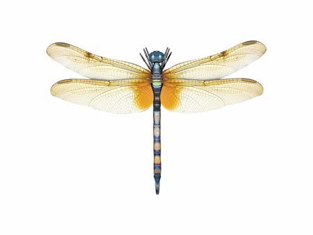 3d render of a dragonfly in top view