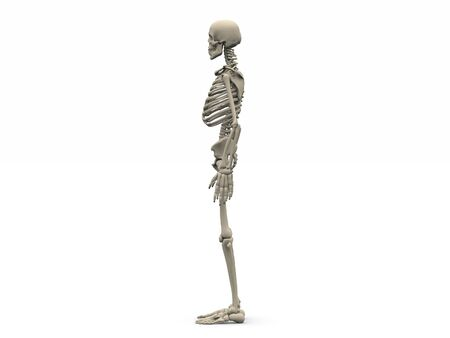 digital render of a human skeleton in side view Stock Photo