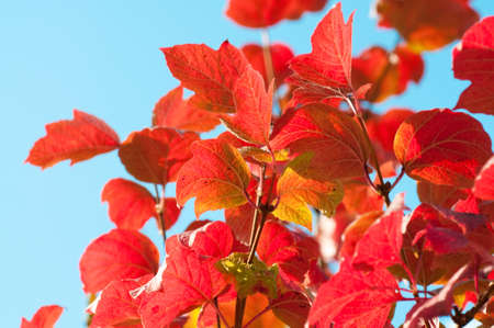 Autumn Leaves with sun rays photo