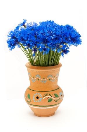 Beautiful blue cornflower photo