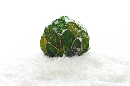 Christmas balls from the leaves in the snow 版權商用圖片
