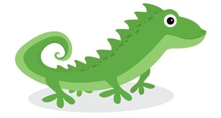 eidechse: Leguan