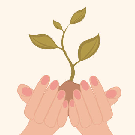 A concept illustration of a green sprout growing in human hands Vector