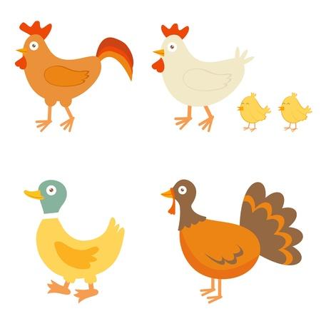 animal cock: Una colorida colecci�n de aves granja Vectores