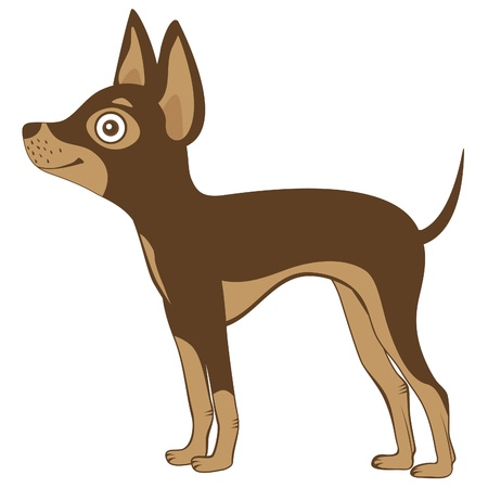 toy terrier: Illustration of Russian toy terrier