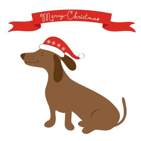 badger dog: Cute badger dog in Santa hat