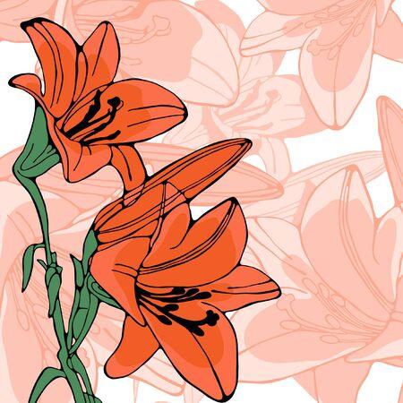 lilium: Elegant illustration of lilly flowers. vector illustration