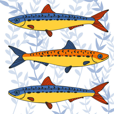 sail fin: Colorful sardines collection